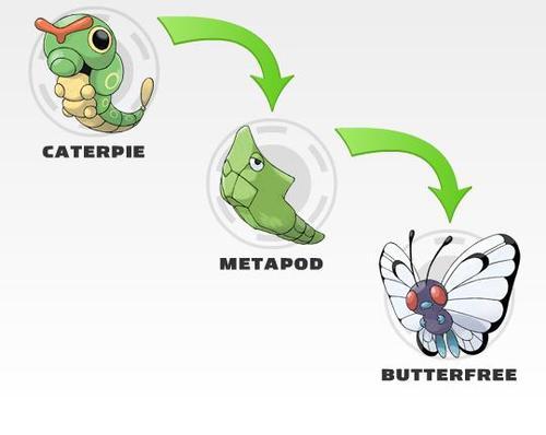 evolucion metapod